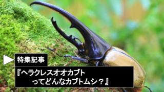ヘラクレスオオカブトってどんなカブトムシ?