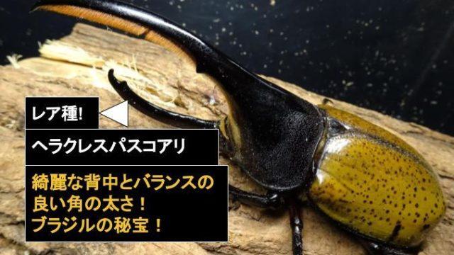 ヘラクレスパスコアリ
